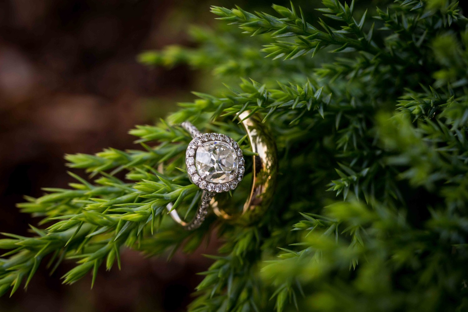 Rings on a bush at the Coeur d'Alene Resort wedding venue, the Hagadone Event Center.