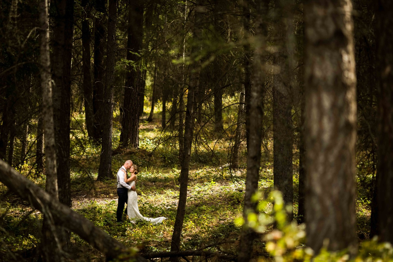 Green Bluff Wedding with bride and groom holding each other in the dark forest with light coming through the trees.