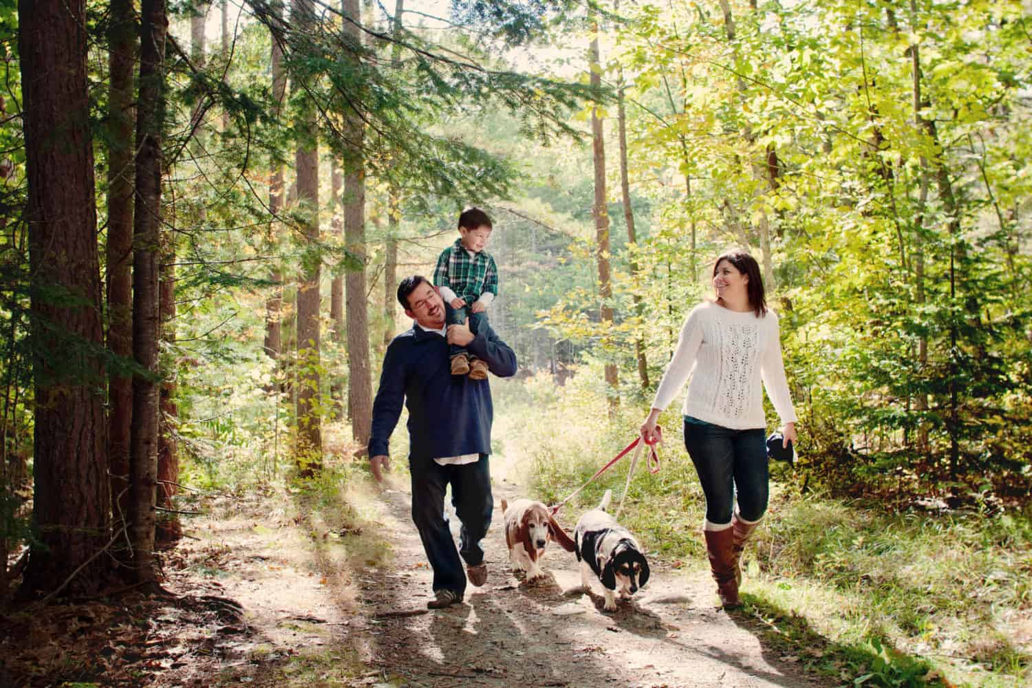 Family of three plus two dogs walking in a beautiful sunlit forest