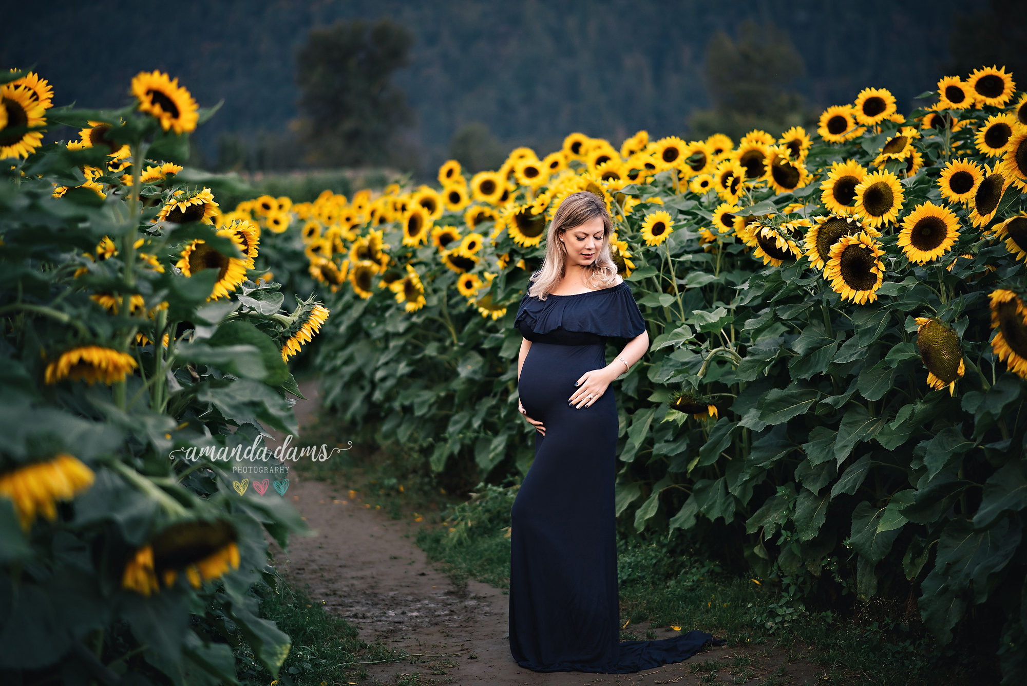 maternity-photo-session-vancouver-sunflower